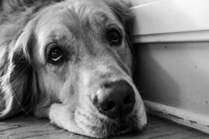 lazy-eye-dogie